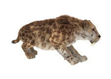 Grande Cat Smilodon Immagine Stock