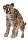 Grande Cat Smilodon Immagini Stock Libere da Diritti
