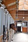 Grande cavallo Fotografie Stock Libere da Diritti