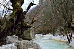 Grande cavité de vieil arbre près d'un courant Photographie stock