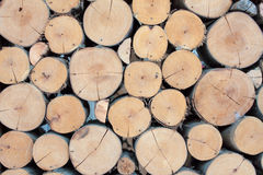 Grande cerchio di legno dell'eucalyptus della parete fotografie stock