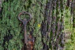 Grande chave de bronze antiquado que encontra-se em um musgo verde na Foto de Stock