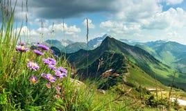 Grande chiara vista dall'alta montagna con i fiori in priorità alta Immagini Stock