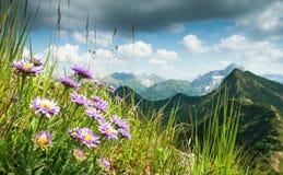 Grande chiara vista dall'alta montagna con i fiori in priorità alta Fotografia Stock