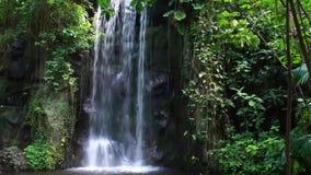 Grande chute coulante de l'eau dans un paysage tropical de forêt tropicale, grands jardins tropicaux, fond de nature banque de vidéos