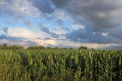 Grande cielo in Mills River, NC Immagini Stock
