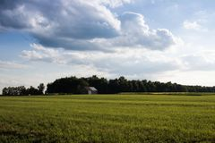 Grande cielo sopra il campo di tabacco con il granaio immagini stock libere da diritti