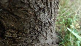 Grande circuito di collegamento di albero stock footage