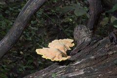 Grande colônia do fungo fotos de stock