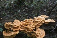 Grande colônia do fungo imagem de stock royalty free