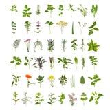Grande coleção da folha e da flor da erva Fotografia de Stock Royalty Free