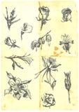Grande coleção das flores ilustração royalty free