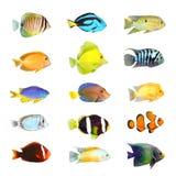 Grande coleção de um peixe tropical. Foto de Stock Royalty Free