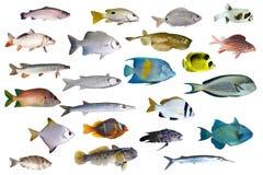 Grande coleção de um peixe tropical em um branco Fotografia de Stock Royalty Free