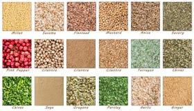 Grande collection d'épices et d'herbes Photographie stock