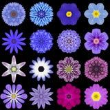 Grande collection de diverses fleurs bleues de modèle d'isolement sur le noir Photographie stock