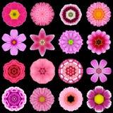 Grande collection de diverses fleurs pourpres de modèle d'isolement sur le noir Image stock