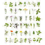 Grande collection de lame et de fleur d'herbe Photographie stock libre de droits