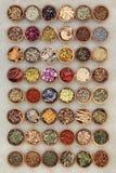 Grande collection de phytothérapie Image stock