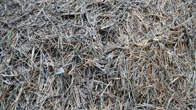 Grande collina della formica stock footage