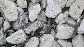 Grande colonie des fourmis ou des termites grouillant sur des roches avec la reine banque de vidéos