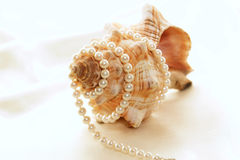 Grande conch com pérolas 3 fotografia de stock royalty free