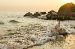 Grande concha do mar no fundo da costa de mar Imagem de Stock Royalty Free