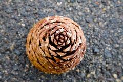 Grande cone do pinho Foto de Stock
