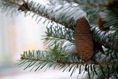 Grande cono del pino Immagine Stock Libera da Diritti