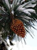Grande cono del pino fotografia stock