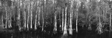 Grande conserve nationale de Cypress Images libres de droits