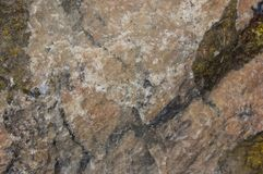 Grande coquille de coque Fin vers le haut de texture de conque d'escargot images libres de droits