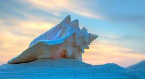 Grande coquille de mer sur le coucher du soleil Images stock