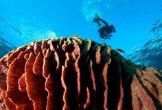 Grande corallo fotografia stock
