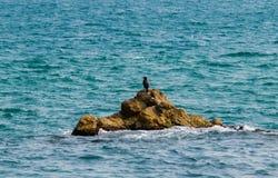 Grande cormorão que senta-se em uma rocha no mar, Espanha loneliness imagem de stock royalty free