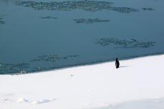 Grande cormorant no gelo Fotografia de Stock Royalty Free