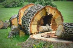 Grande coto de árvore caído imagens de stock royalty free