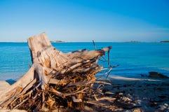 Coto de árvore na praia Fotos de Stock Royalty Free