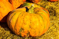 Grande courge pour Halloween Image stock