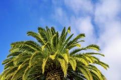 Grande couronne de palmier contre le ciel bleu Photo stock