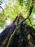 Grande CR dell'albero immagine stock
