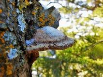 Grande crescita dell'albero Fotografie Stock