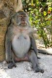 Grande détente fâchée de singe photo libre de droits