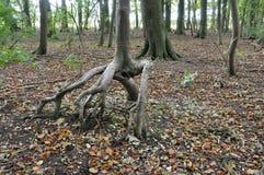 Grande Dale East Yorkshire England escavado Fotografia de Stock Royalty Free