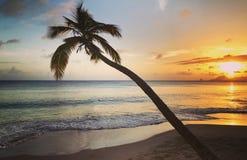 Grande DES Slaines de Anse en Martinica Fotografía de archivo libre de regalías