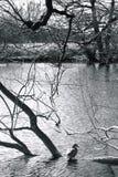 Grande Driffield Yorkshire orientale Inghilterra Fotografie Stock