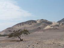 Grande dune de sable Photo libre de droits
