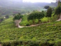 Grande e vista fredda dell'azienda agricola del tè fotografia stock libera da diritti