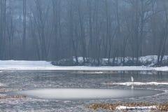 Grande egretta (ardea alba) durante l'inverno Immagine Stock