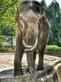 Grande elefante Fotografia Stock Libera da Diritti
